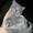 Британский короткошерстный котенок. #1105177