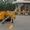 Полуприцеп контейнеровоз C-Trailer SCD9350TJZ, 2014 г #1159028