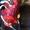 AST-GROUP- запчасти для экскаваторов,  бульдозеров,  кранов #1321153