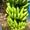 Бананы #1593998
